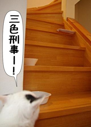 Shirokuro1107_2
