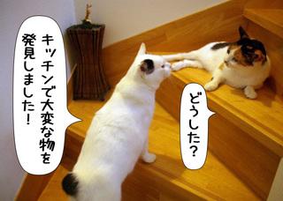 Shirokuro1107_3