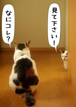 Shirokuro1107_4