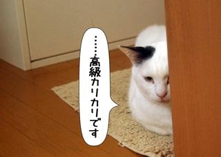Shirokuro1107_5