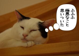 Shirokuro1108_1