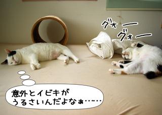 Shirokuro1108_3