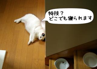Shirokuro1108_5