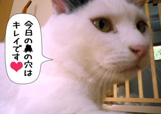 Shirokuro1109_10
