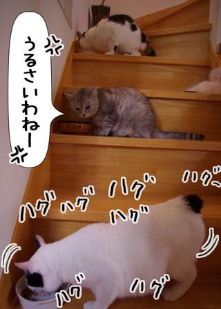 Shirokuro1109_4