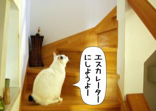 Shirokuro1109_5