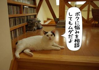 Shirokuro1109_6