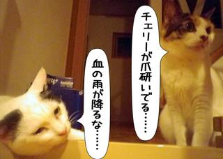 Shirokuro1109_7