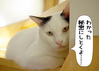 Shirokuro1111_1