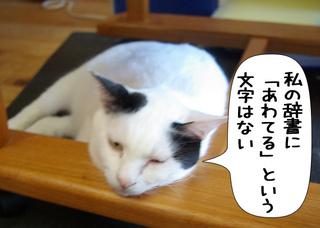 Shirokuro1111_3