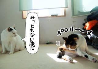 Shirokuro1201_11