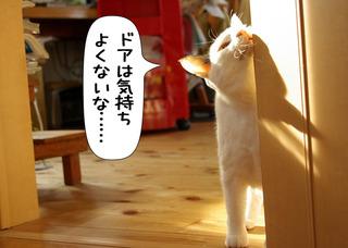 Shirokuro1201_12