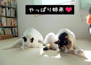 Shirokuro1201_3