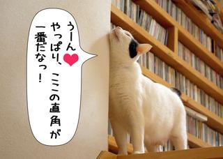 Shirokuro1201_4