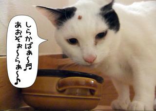 Shirokuro1202_7