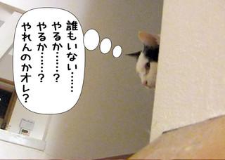 Shirokuro1203_10