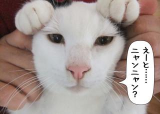 Shirokuro1203_8
