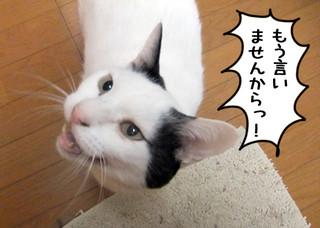 Shirokuro1204_1