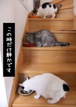 Shirokuro1204_10