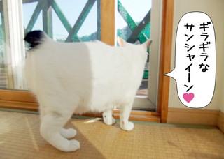 Shirokuro1205_1