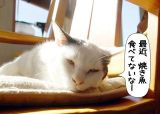 Shirokuro1205_3