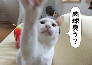 Shirokuro1208_1