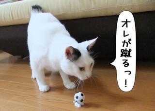 Shirokuro1208_2