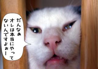 Shirokuro1208_8