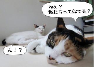 Shirokuro1209_1