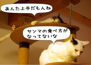 Shirokuro1210_2