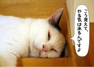 Shirokuro1210_3