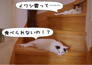 Shirokuro1210_4