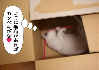 Shirokuro1210_7