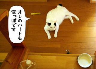 Shirokuro1210_9
