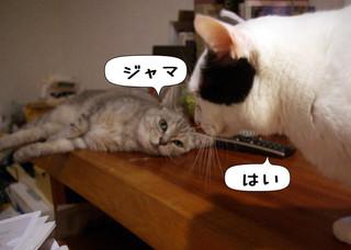 Shirokuro1211_7