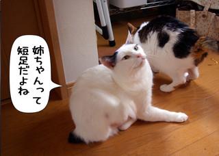Shirokuro1212_6