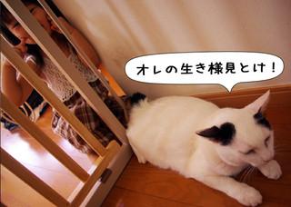 Shirokuro1212_7