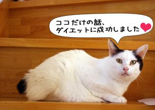 Shirokuro1212_8