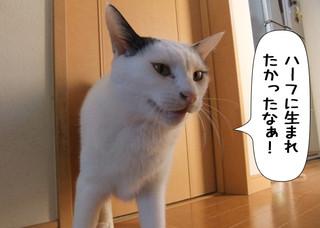 Shirokuro1301_5