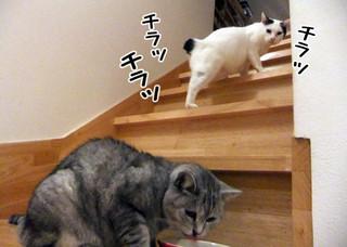 Shirokuro1301_6