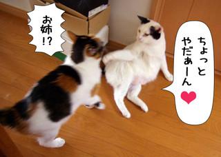 Shirokuro1301_8