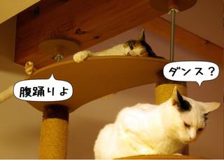 Shirokuro1303_2