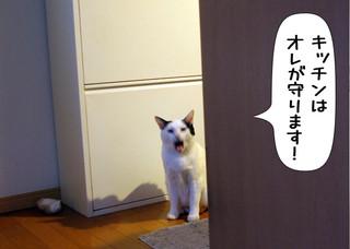 Shirokuro1304_7