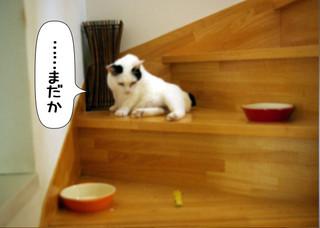Shirokuro1308_3