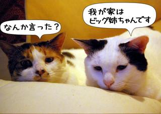 Shirokuro1308_4