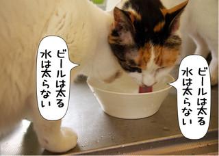 Shirokuro1309_1