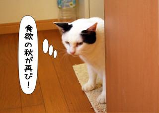 Shirokuro1309_11