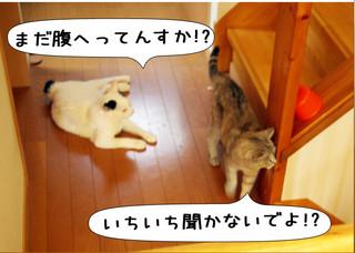 Shirokuro1309_7