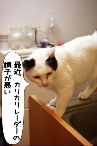 Shirokuro1309_8