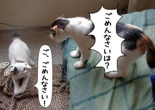 Shirokuro1310_4